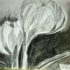 Kohlezeichnung, Bleistiftzeichnung, Pflanzen, Zeichnungen