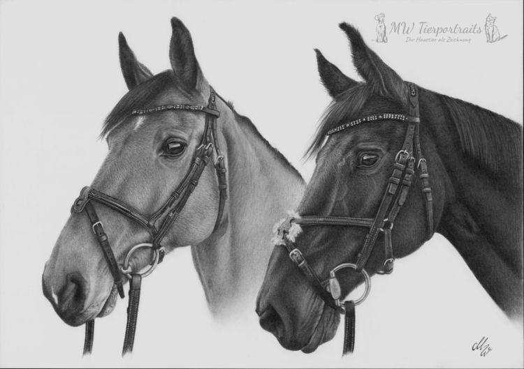 Bleistiftzeichnung, Tierzeichnung, Zeichnung, Pferdeportrait, Pferde, Pferdezeichnung