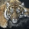 Pastellmalerei, Katze, Tierportrait, Tiger