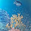 Korallen, Fisch, Meerestiefe, Unterwasserwelt