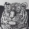 Tiere, Linolschnitt, Tiger, Katze
