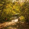 Landscape nature, Tegel, Herbstmotiv, Sonnenstern