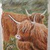 Langeoog, Hochlandrind, Highland cattle, Pastellmalerei