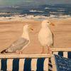 Möwe, Strandkorb, Langeoog, Meer