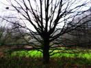 Landschaft, Kahl, Baum, Fotografie