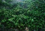 Süden, Thailand, Baumbewuchs, Steilküste