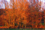 Herbst, Dämmerung, Gehölz, Landschaft