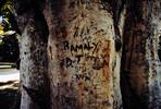 Baum, Schnitzkunst, Erinnerung, Malaysia
