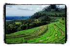 Reis, Bali, Fotografie