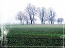 Radfahren, Ruhrgebiet, Winter, Baum