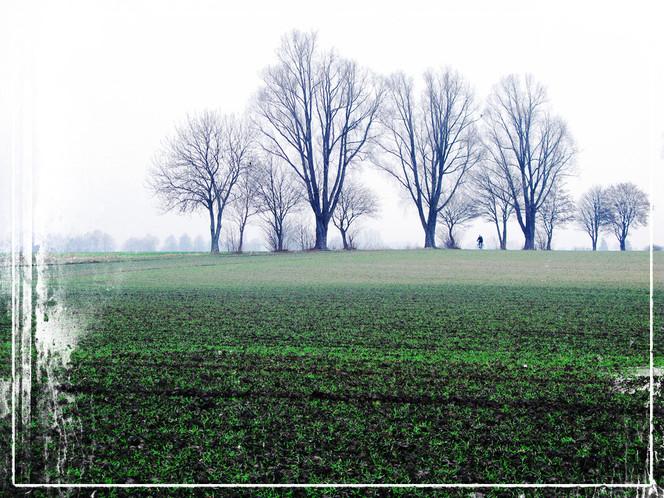 Winter, Baum, Feld, Radfahren, Ruhrgebiet, Fotografie