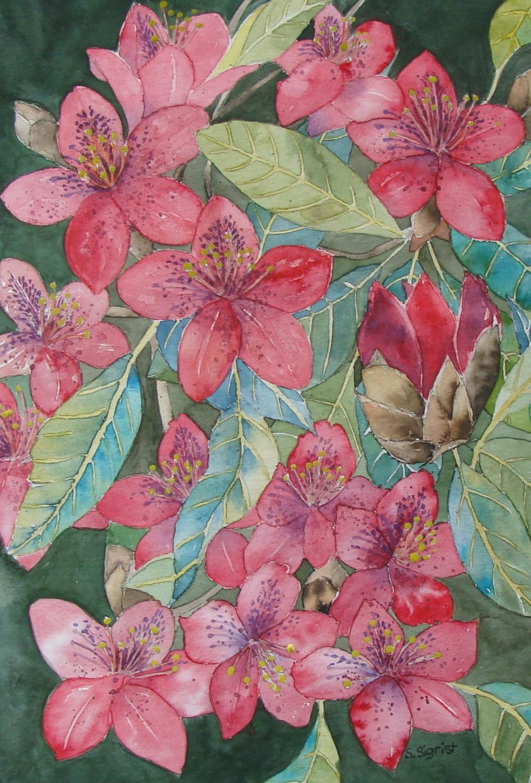 bild rhododendron fr hling malters strauch von sabine. Black Bedroom Furniture Sets. Home Design Ideas