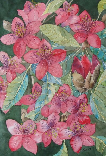 Moorbeet, Rot, Rhododendron, Frühling, Grün, Aquarellmalerei