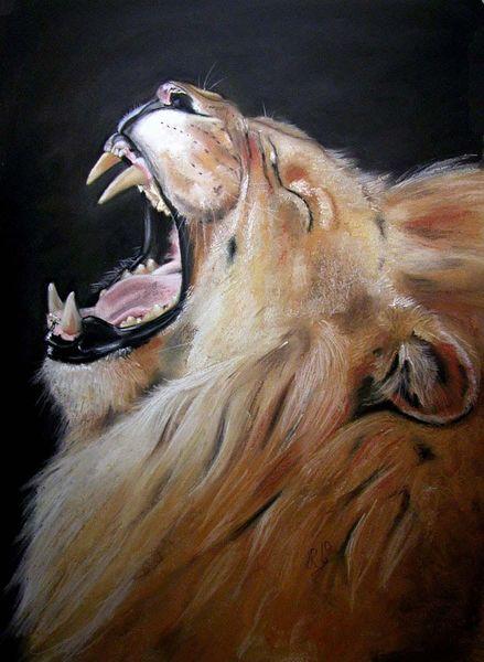 Wild, Katze, Wüste, Brüllen, König, Löwe