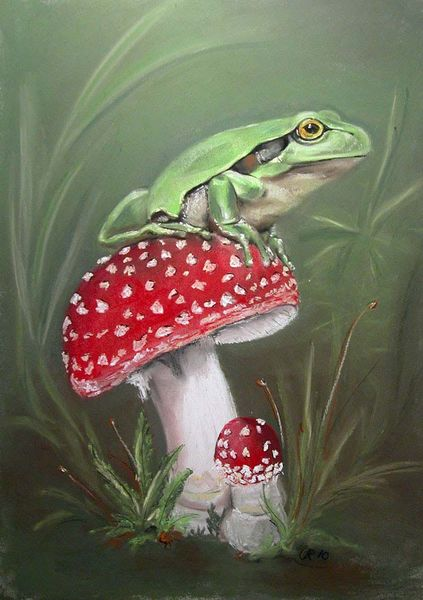 Laubfrosch, Pilze, Amphibien, Wald, Grün, Sitzen