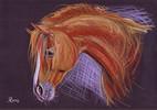 Zeichnungen, Portrait, Pferdeportrait