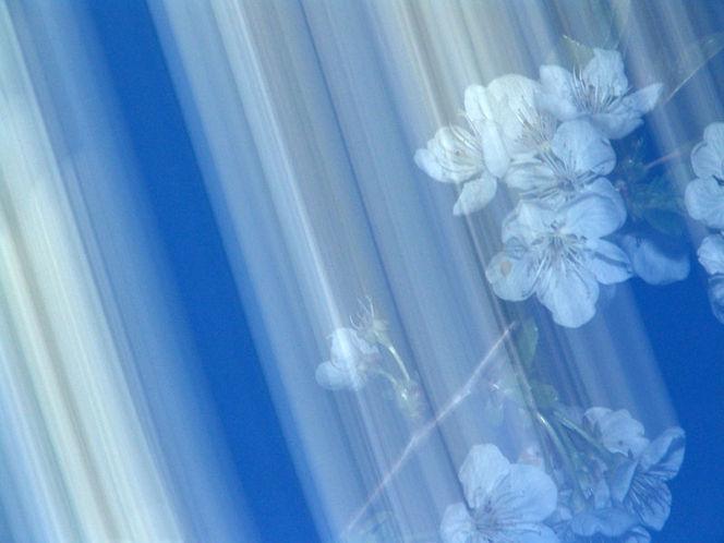 Lightpainting, Blüte, Lichtmalerei, Verwischen, Blau, Wischeffekt
