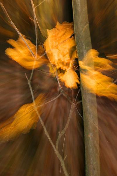 Feuer, Lightpainting, Herbst, Herbstlaub, Wischeffekt, Verwischen