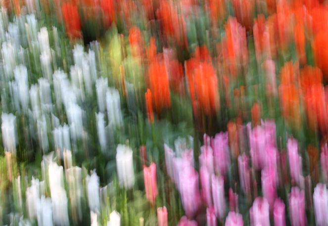 Lightpainting, Blumen, Verwischen, Wischeffekt, Lichtmalerei, Fotografie