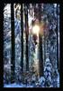 Schnee, Wald, Winter, Fotografie
