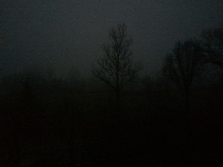 Dämmerung, Nebel, Morgen, Baum, Fotografie, Nacht