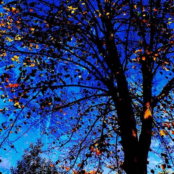 Blätter, Hagebutte, Leuchten, Blau, Baum, Digitale kunst