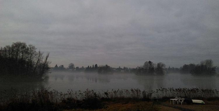 See, Nebel, Ufer, Baum, Fotografie, Wasser