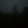 Morgen, Baum, Dämmerung, Nebel