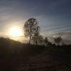 Baum, Straße, Sonne, Himmel