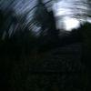 Baum, Unsichtbare treppe, Stimme, Fotografie