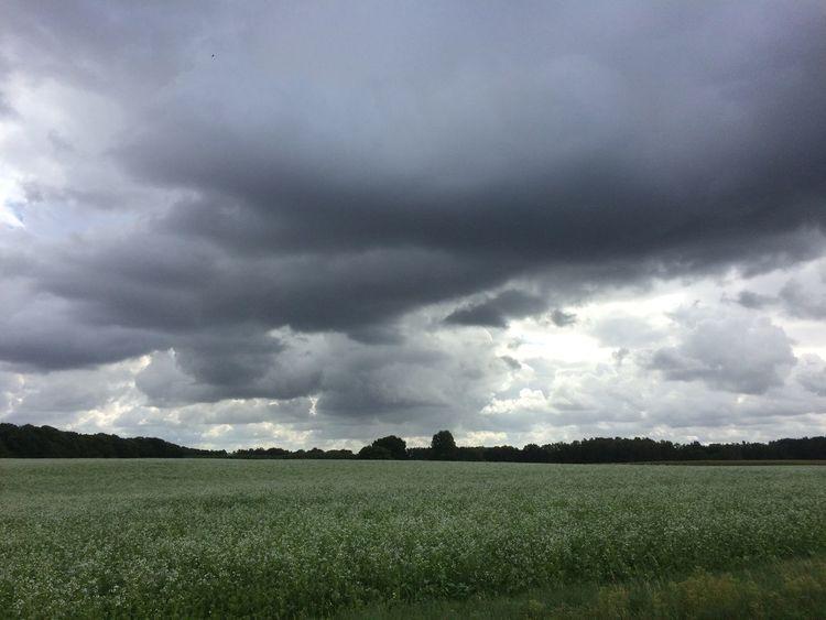 Baum, Wolken, Himmel, Feld, Fotografie, Sommer