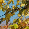 Sonne, Blätter, Herbst, Fotografie