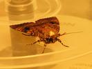 Insekten, Querstreifen, Extrem, Gefahr