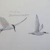 Vogel, Brandseeschwalben, Ölmalerei, Studie