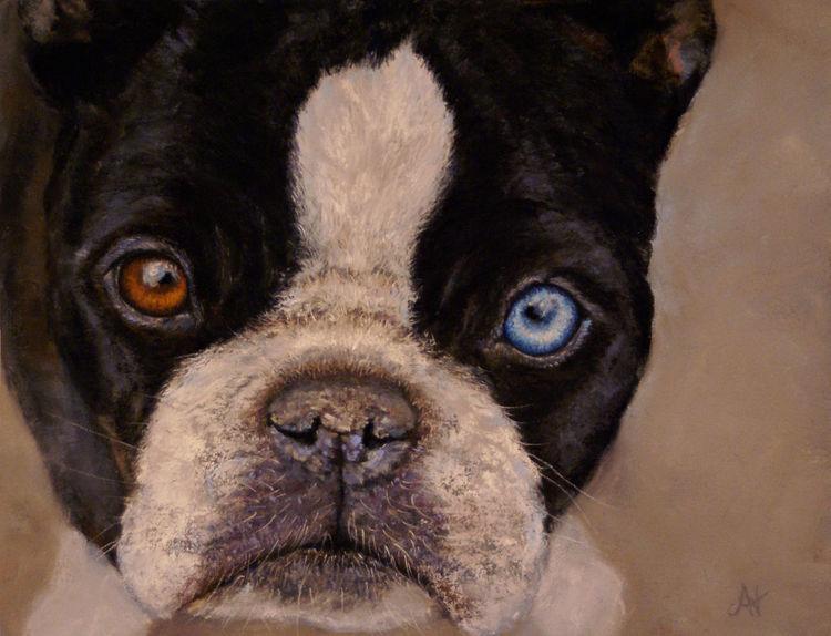 Augen, Pastellmalerei, Hund, Portrait, Tiere, Klassisch