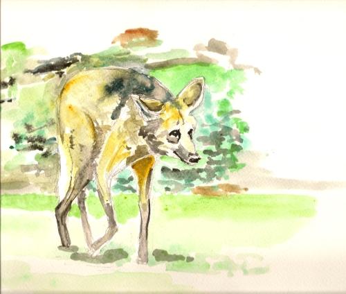 Mähnenwolf zoo nürnberg, Aquarell, Figural, Zoo