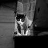 Katze, Dach, Schwarzweiß, Fotografie