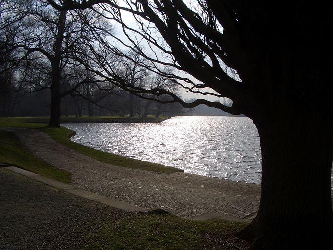 Baum, See, Weg, Fotografie, Silber, Sehen