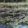 Teich, Sonnig, Wasser, Romantik