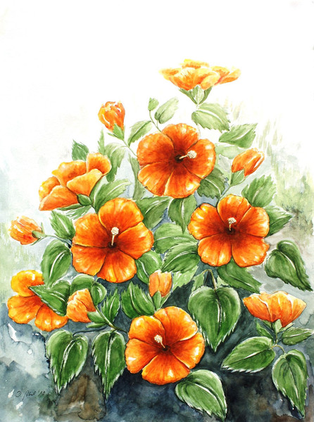 Garten, Pflanzen, Hibiskus, Natur, Blumen, Blüte