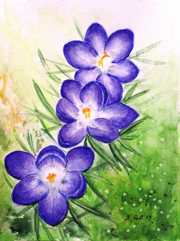 Krokusse garten blumen krokus pflanzen von doris abel for Garten pflanzen blumen