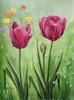 Frühling, Tulpen, Garten, Wiese