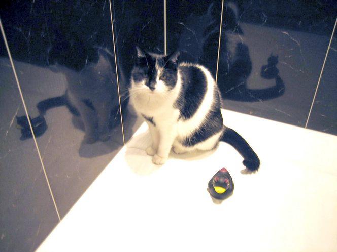 Langeweile, Duschen, Quitscheente, Katze, Fotografie