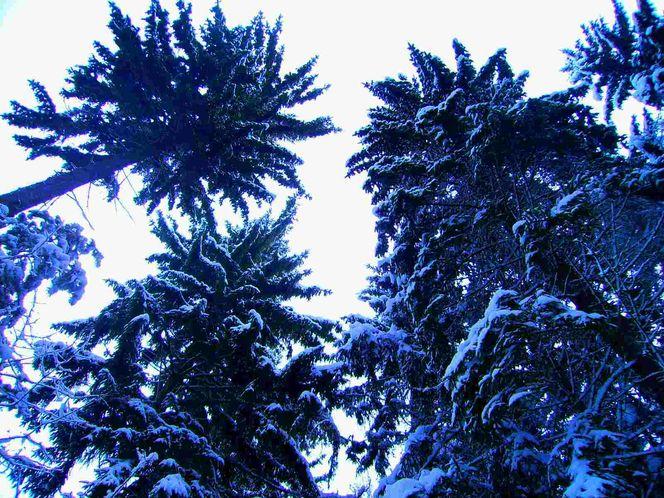 Winter palmen schnee, Fotografie, Surreal