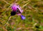 Schmetterling, Sommer, Sonne, Wiese