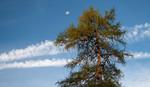 Baum, Harmonie, Mond, Brause