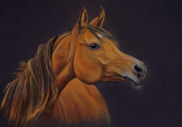 Pferde, Tiere, Pastellmalerei, Tierportrait, Kreide, Stute