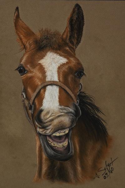 Kreide, Pastellmalerei, Portrait, Fohlen, Grimasse, Pferde