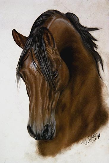 Pastellmalerei, Pferde, Tiere, Araber, Braun, Pony