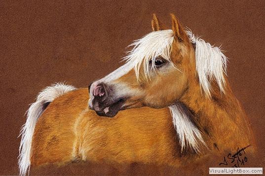 Hafi, Pastellmalerei, Pferde, Kreide, Pony, Wallach